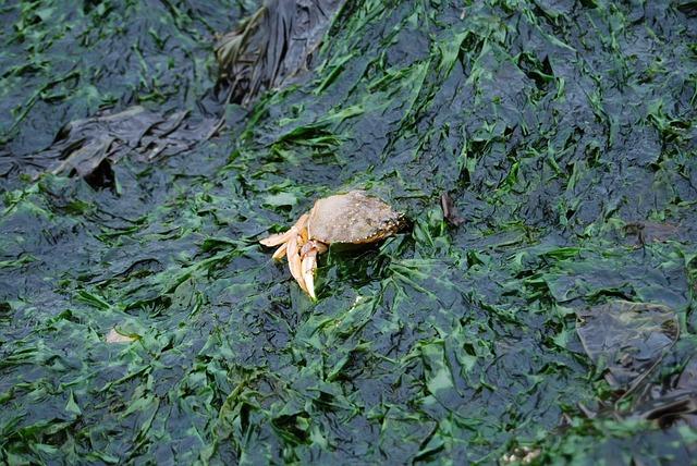 Az algák Földünk legősibb élőlényei, bolygónk oxigéntartalmának 90 százalékát állítják elő